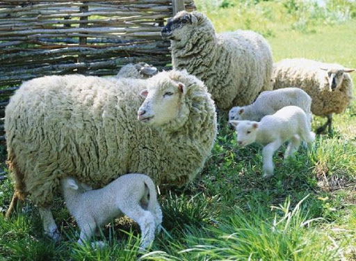 Culture and Folklore in the days of the National Festival of Sheep Breeders